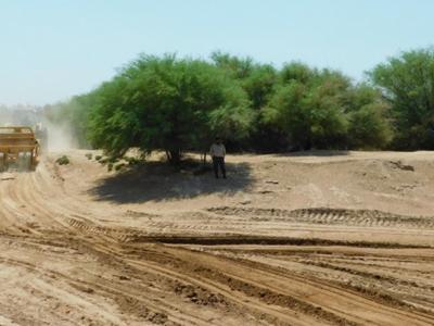 La desertificación: el mal que aqueja a estas tierras